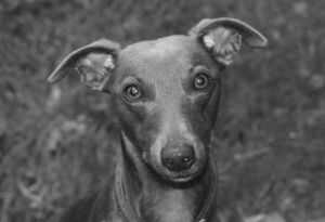 Joey Ross Photography Image - Pets